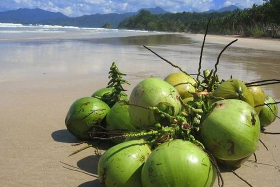 green technologies coconuts